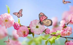 Jocs Florals – 21 d'abril